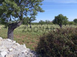 Mallorca im Fruehling