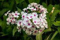 Blüten pracht