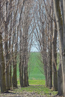 Forest trees tunel