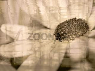 Blüten Makro mit Wellen Textur in zarter Tonung