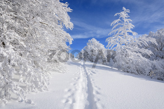 Snowy winter landscape with snowshoe trail