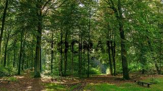 Sonnendurchflutete Waldlichtung nahe der Kroneneiche bei Chorin