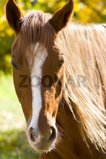 Portrait of a horse on yellow