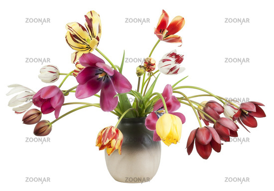 Striped faded tulips