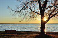 The Sun Shining Through a Tree in the Late Fall