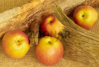 Wurzel mit Äpfel