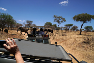 Handyfoto im Tarangire Notianalpark Tansania