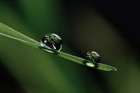Perlen der einfachen Schönheit