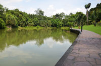 Lake in Singapore Botanic Garden