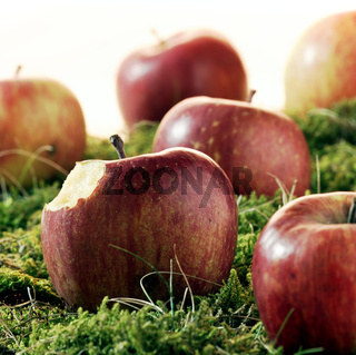Äpfel einer angebissen im Moos