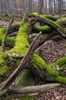 Moss covered III