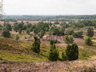 Lüneburger Heide, Deutschland, Luneburg Heath, Germany