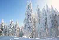 Winterwald am hohen Bogen im Bay. Wald