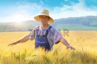 Farmer checking put his crop of wheat