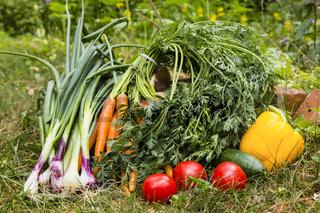 Gemüse, vegetables