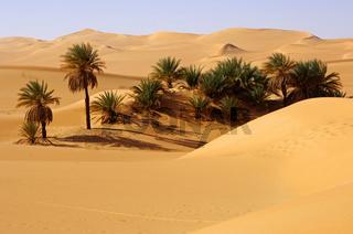 Palmenoase, Sahara