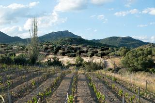 Weinberg und Oliven bei Nuoro, Sardinien
