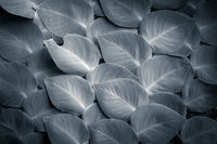 Fantasy colors of tropical plant leaves