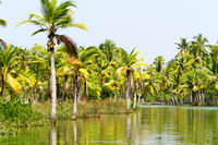 Jungle of the Kerala backwaters, chain of lagoons and lakes