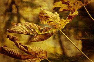 Blätter im Herbst Wind