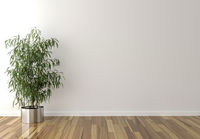 Solo interior plant and blank wall in background