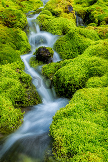 Small mountain stream surrounded by moss