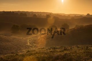 Lensflares... Sonnenaufgang *Veluwe*