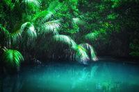 Fantasy landscape mangrove forest. Sri Lanka