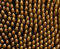 Macro view of tooth pick tips