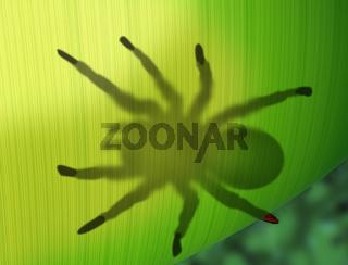 Rainforest spider hiding behind a leaf