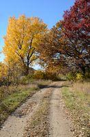 Autumn Colors Along a Rural Road