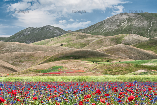 Castelluccio during the flowering