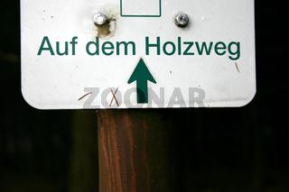 Sind Sie 'auf dem Holzweg' oder sehen Sie den Wald vor lauter Bäumen nicht? Ein Symbolfoto für Politik
