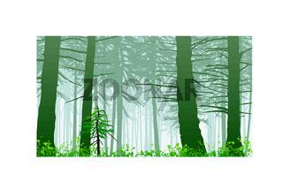 inspiring misty rainforest scene on mount maxwell
