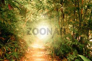 Tunner with sun rays in fantasy tropical forest