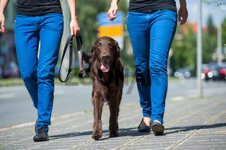 Mit dem Hund in der Stadt