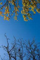 sonniger Herbst mit blauem Himmel