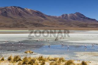 Laguna Hedionda, Bolivien