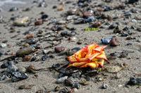 blüte am strand