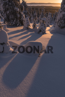 Morgenstimmung, Riisitunturi Nationalpark, Lappland