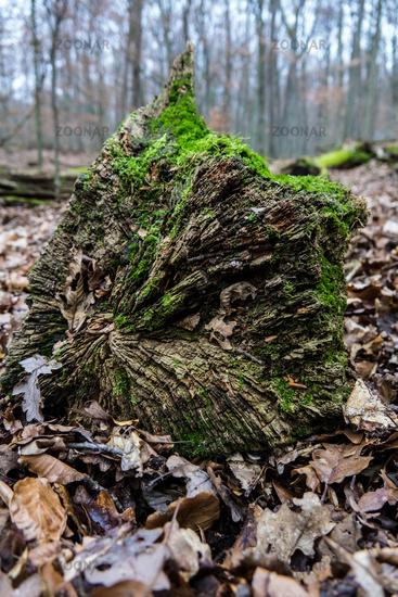 Moss covered I