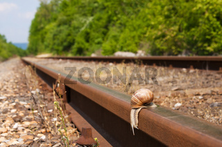 Snail  hurry from the railway track