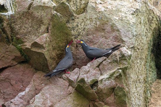 Inca sterns in paracas national park peru