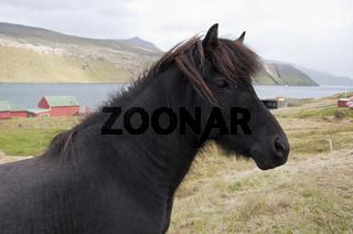 Färöer-Inseln, Pferd