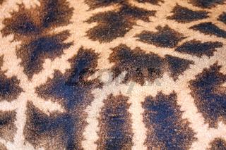 Fell einer Giraffe, Kruger NP, Südafrika - fur of a giraffe, Kruger NP, South Africa