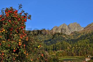 Apfelanbau in Suedtirol