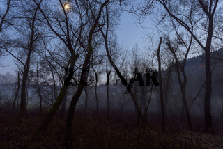 Riparian Forest in Moonlight