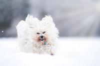 Glücklich im Schnee