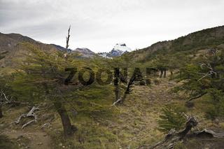 Suedbuchenbuchenwald (nothofagus), Nationalpark Los Glaciares, Argentinien