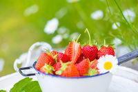 Erdbeeren frisch aus dem Garten